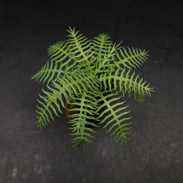 <p>These ferns, or ground-palms, are found on jungle soil worldwide. They can be used as tropical mini-palms if mounted on scratchbuilt or ready-bought stems, and in smaller scales as giant &ldquo;tree-ferns&rdquo; like appearing in Papua, New-Zealand and Hawaii.&nbsp;<br />